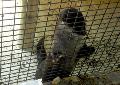 """With the help of Rotarians, Panama City Zoo names one of their otters """"Josh"""" after Josh the Baby Otter book!"""